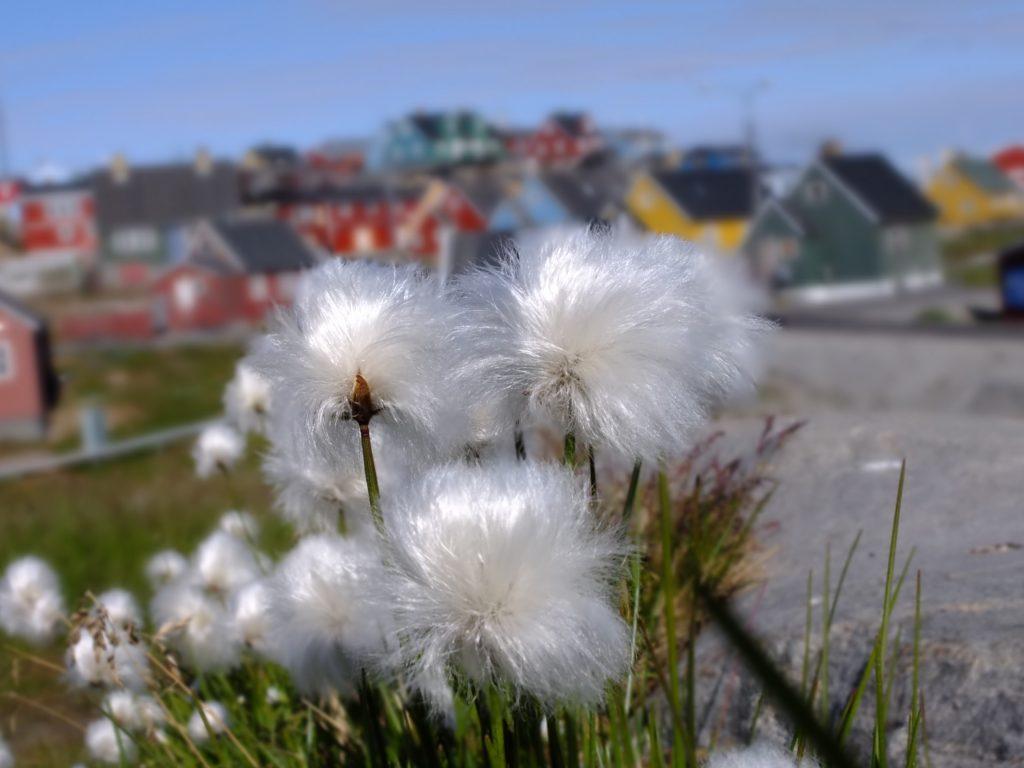 グリーンランド 5 shutterstock_347391152