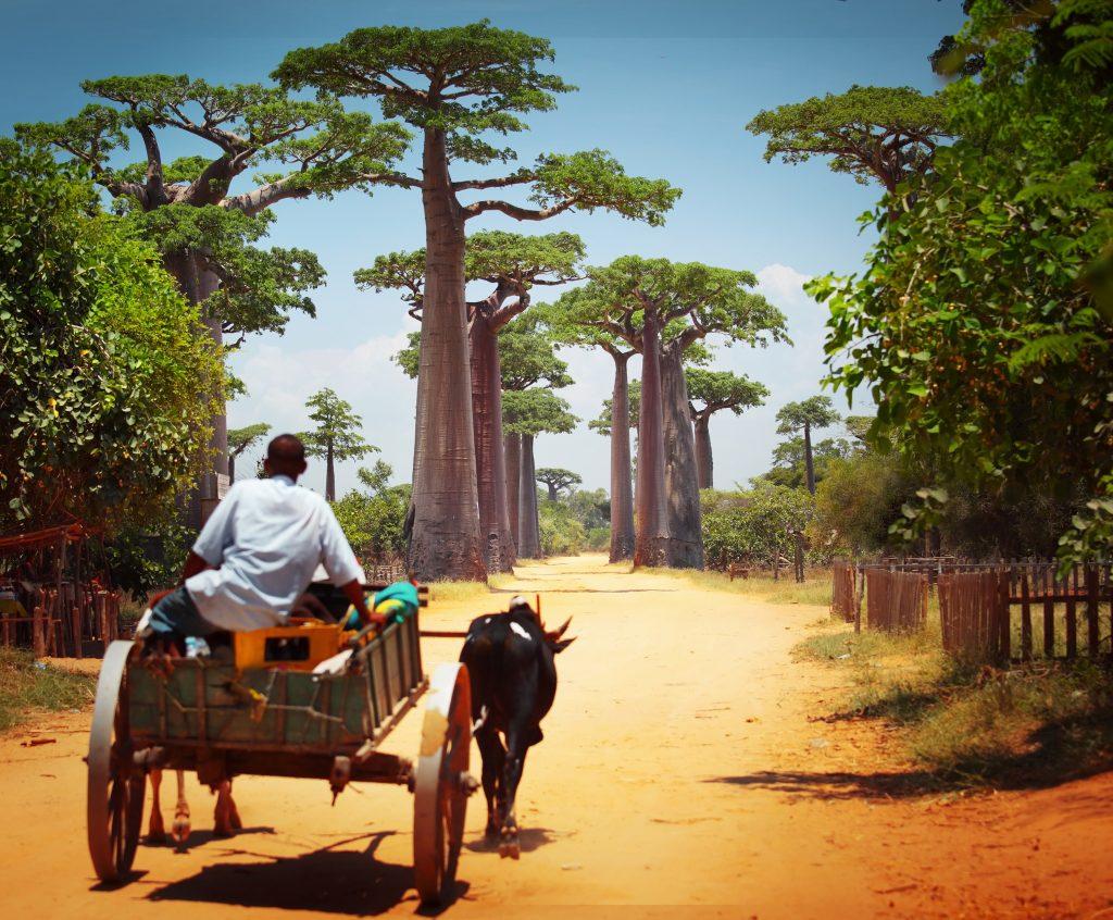 マダガスカル 7 shutterstock_172078502